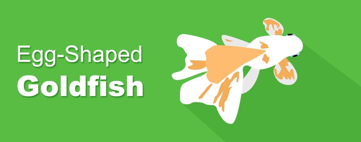 eggshapedgoldfish