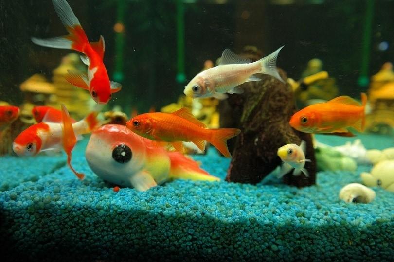 fish-aquarium-pixabay