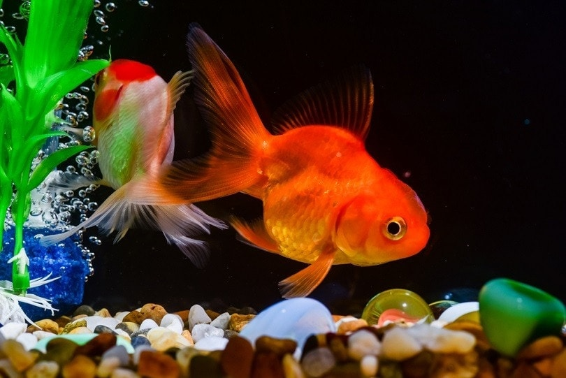 fish-in-the-aquarium_Chaikom_shutterstock