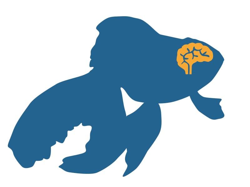 goldfish-brain