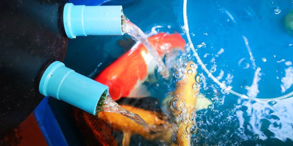 goldfish by oxygen filter