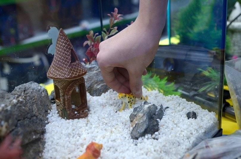 hand arranging decorations in an empty aquarium_Krysja_shuttesrtock