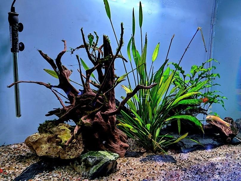 island-setup-of-aquarium_Aman-Kumar-Verma_shutterstock