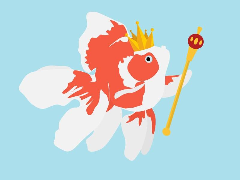 king-goldfish