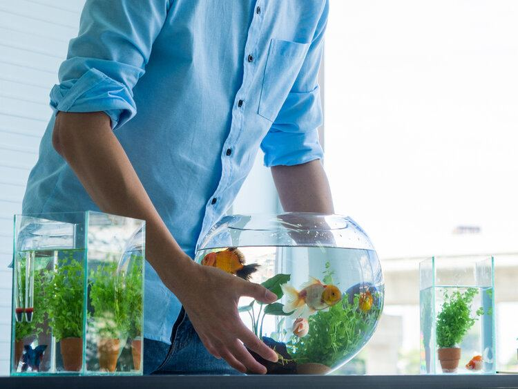 muliple-sized-fish-tanks