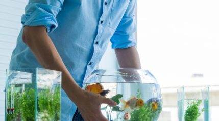 muliple sized fish tanks