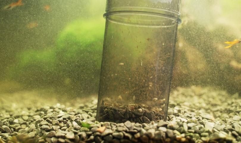 powered gravel cleaner in aquarium_Dmitri Ma_shutterstock