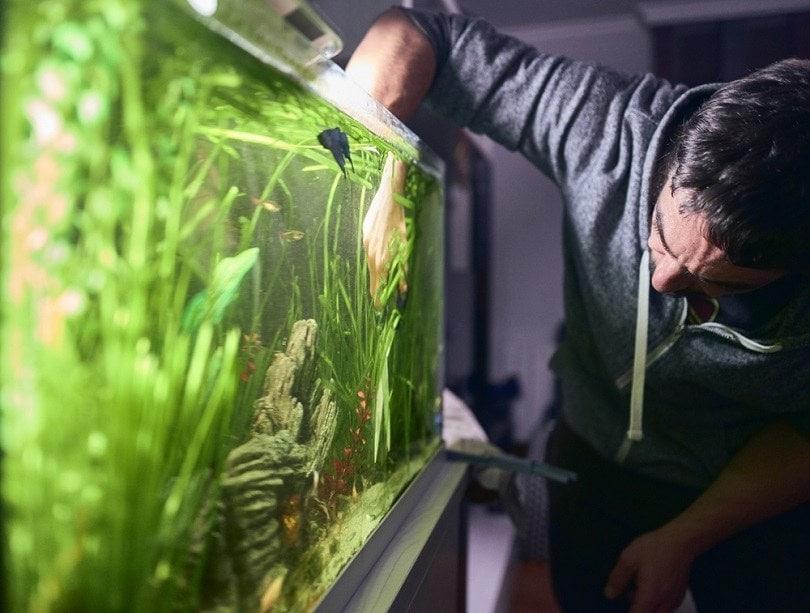 pruning-the-plants-in-his-aquarium