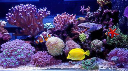 saltwater tank clownfish tropical fish coral