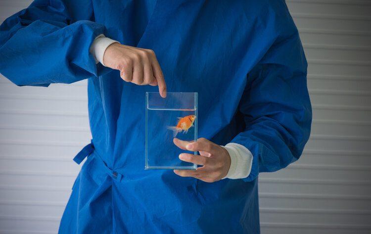 vet holding goldfish
