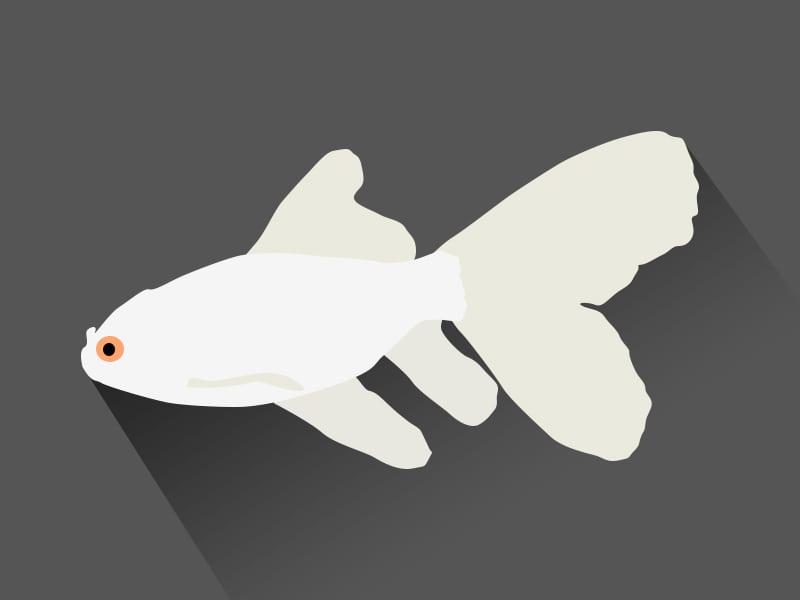 white-goldfish