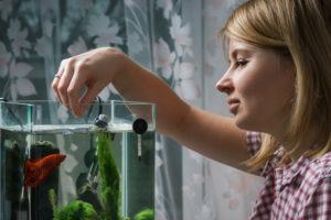 woman feeding betta fish in aquarium