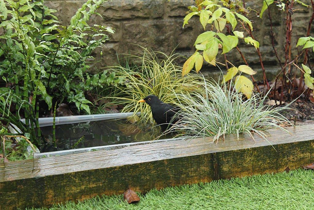 bird bathing in a pond