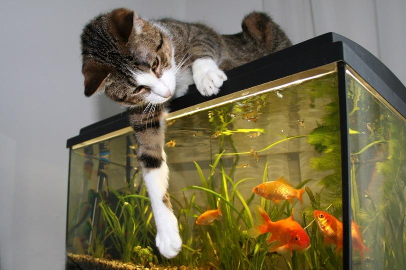 cat sitting on the aquarium