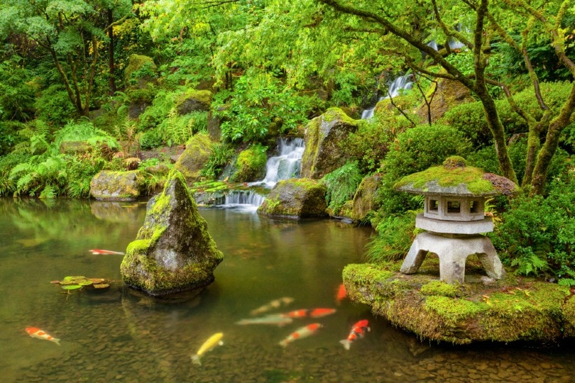 fish pond filled with moss