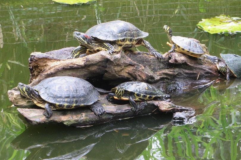 group of sea turtles