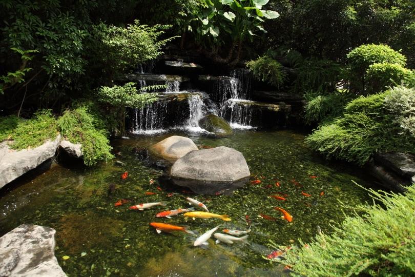 koi garden pond